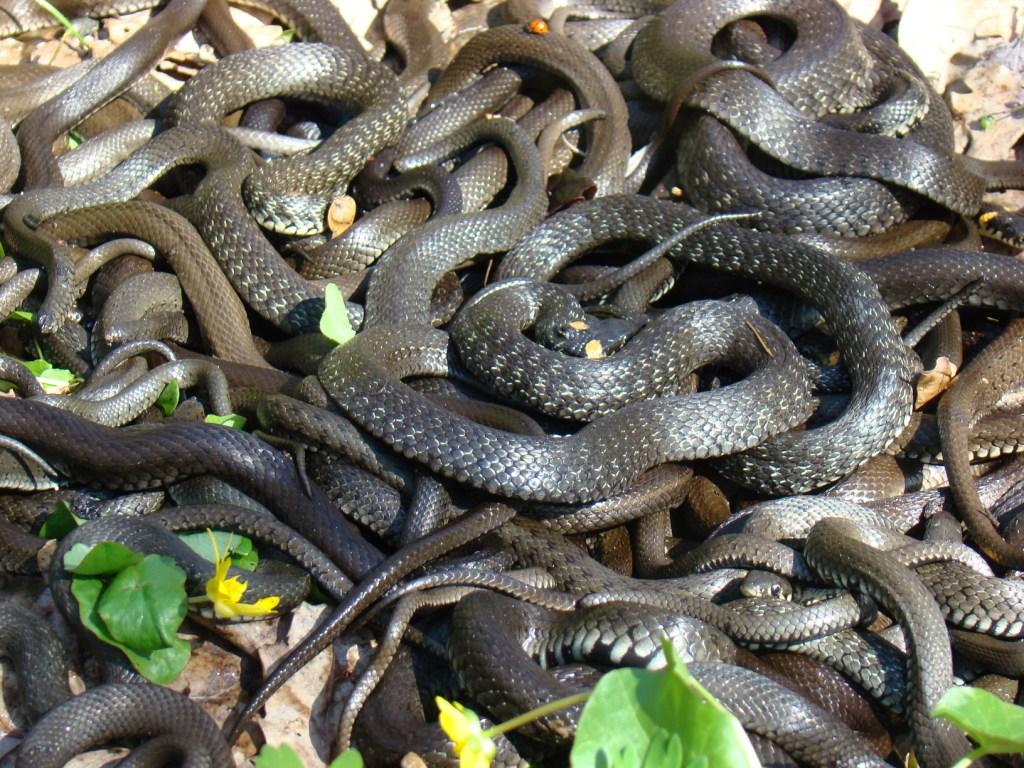 как известно, женский коллектив змеи фото жизни