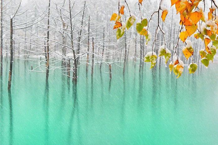Зеленый пруд и желтые листья.