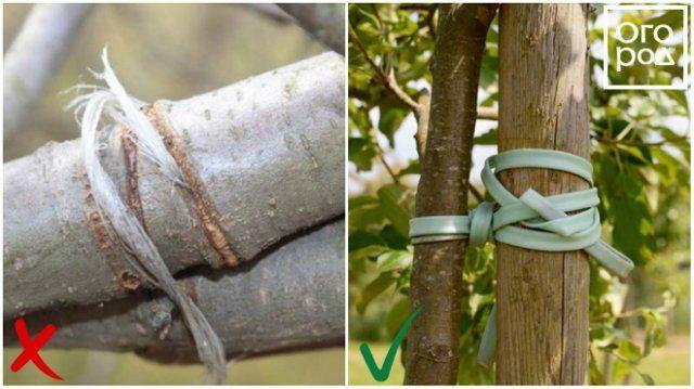 Материал для обвязки дерева