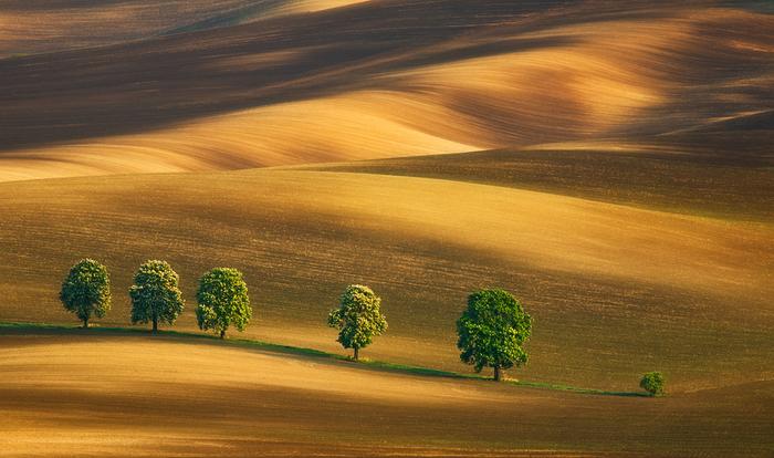 Золотые поля. Автор: Krzysztof Browko.