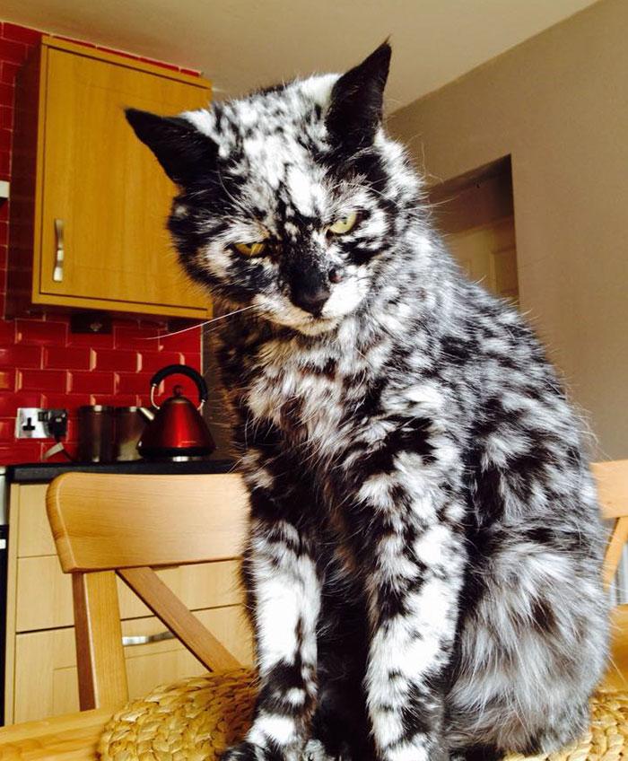 Новые демотиваторы с котами на сегодня только