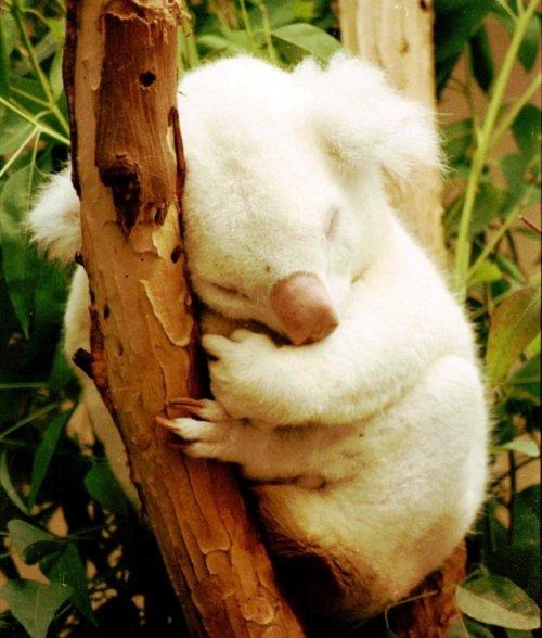 Картинки по запросу Потрясающие животные альбиносы