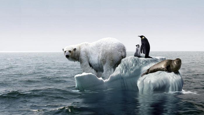Экологические проблемы XXI века..