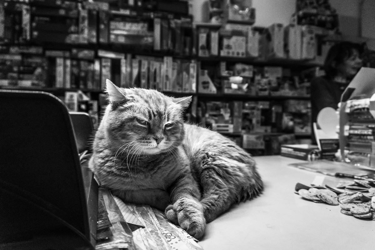 Картинка кот идет на работу