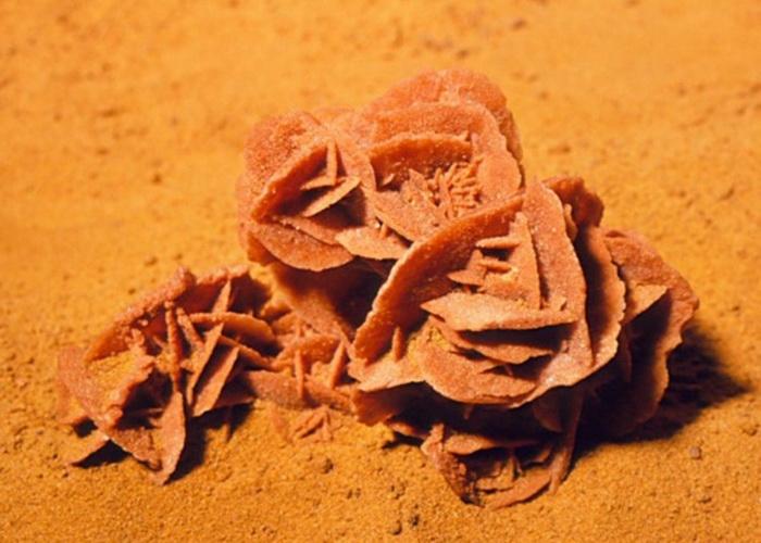 Роза песков