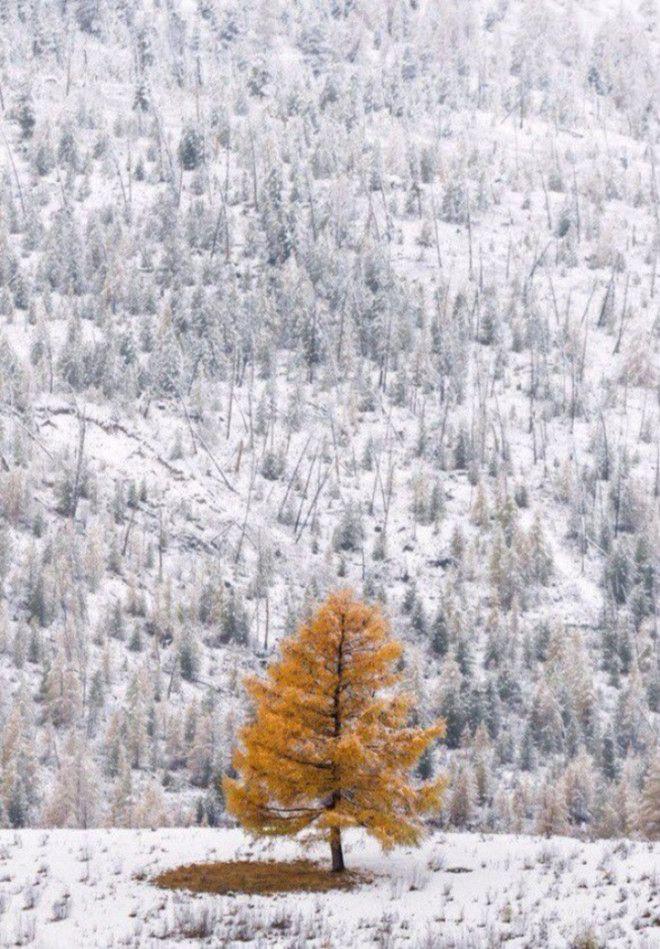 30 фото про те, що зима творить дива крутіші за фотошоп - фото 3