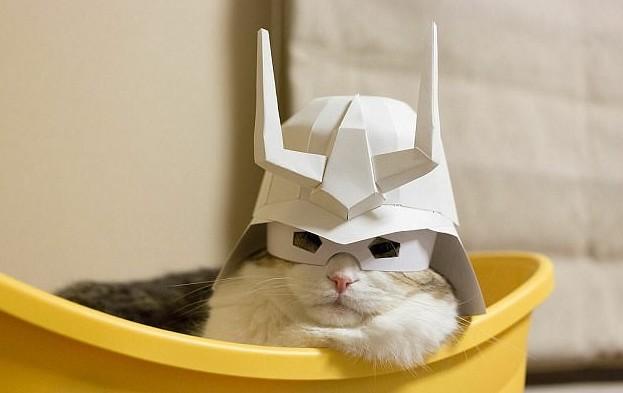 Имперский штурмовик в зимнем обмундировании животная мода, животные, животные и люди, коты, показ мод, смешно, фото, шляпки