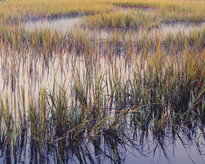 Злаки, вечерний свет, Южная Каролина, 2014 год. Автор: Christopher Burkett.