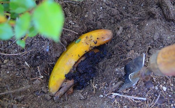 использование банановой кожуры, что можно сделать с банановой кожурой