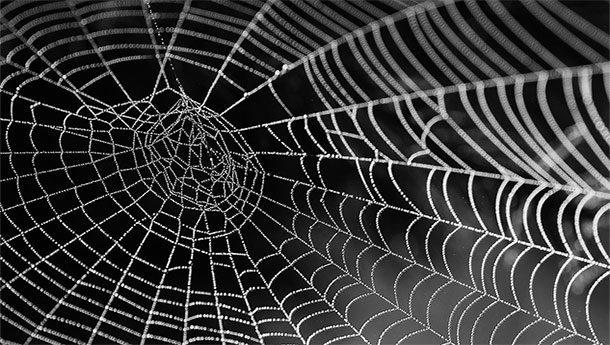 Шёлк паука Дарвина