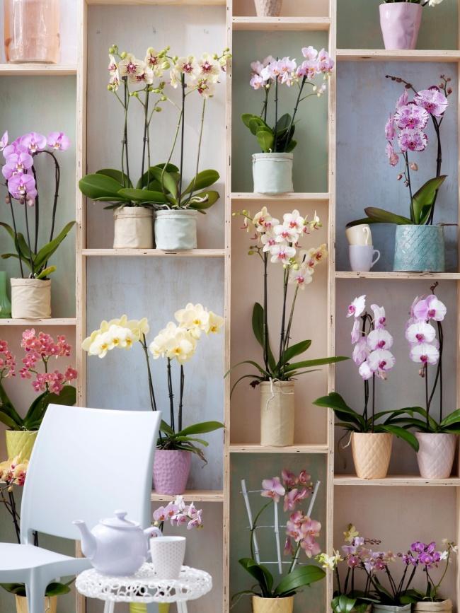 Мечта каждой хозяйки - полка на всю стену с разнообразными орхидеями. Обратите внимание на разнообразие оформления керамических горшков
