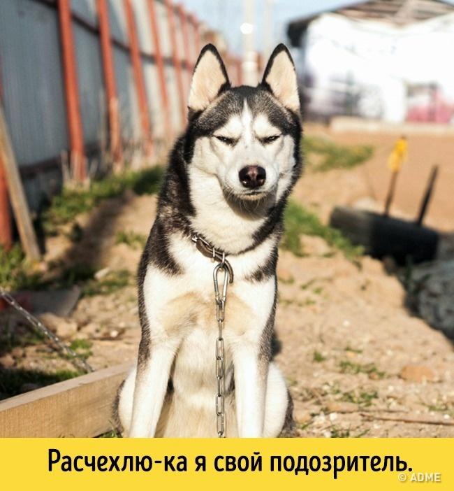Котоматрица  - Страница 39 Fullsize