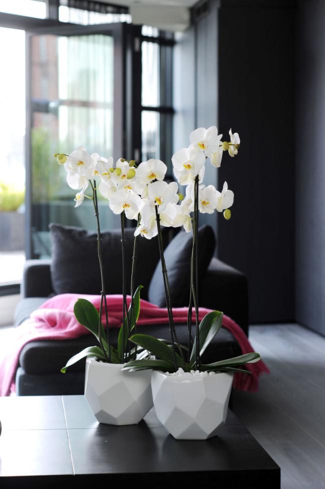 Белые пластмассовые горшки для орхидей в форме неправильных многогранников