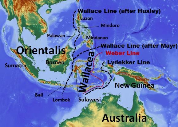 Лусон, где был найден новый вид древних людей, отделен от Евразии линией Уоллеса, морскими проливами, за которые не могут попасть обычные млекопитающие. Предки человека лусонского смогли, показав способность, пересекать морские преграды ©Wikimedia Commons