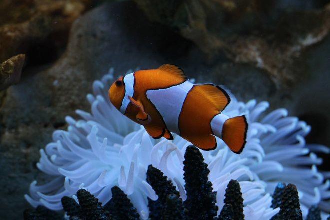 3. Клоун животный мир, море, природа, путешествия, рыбки