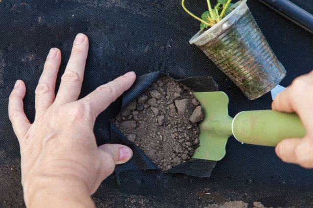 копать лунку через спанбонд