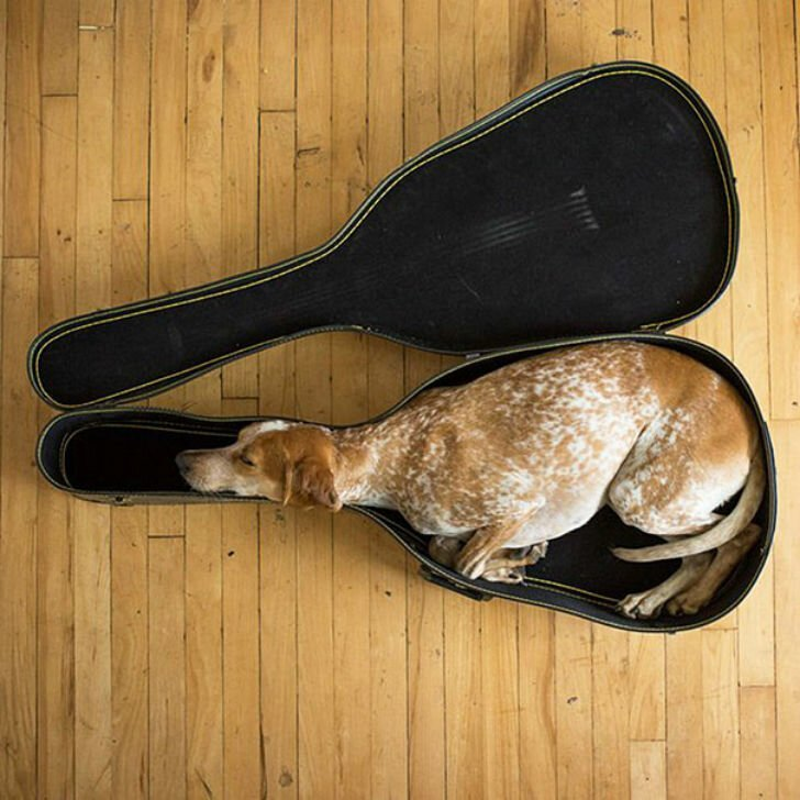 Фотографии животных, которые спят там, где захотят 3