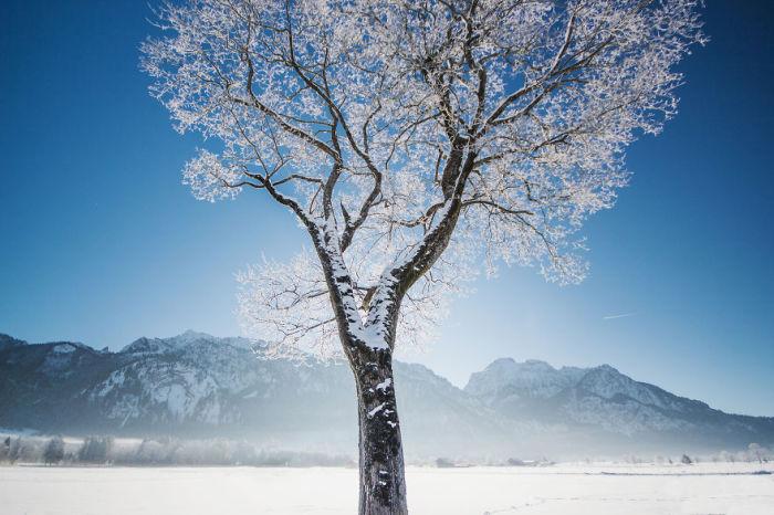 Дерево в снегу.