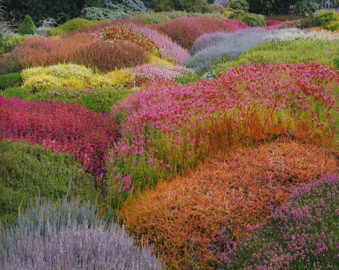 Летний сад вереск, Калифорния, 1998 год. Автор: Christopher Burkett.