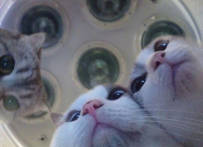 30котиков, всуществование которых сложно поверить кот, позитив, животные