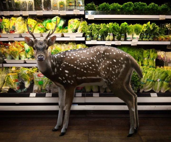 CuriousAnimals01 Животные в супермаркете