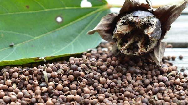 Растение можно размножать семенами