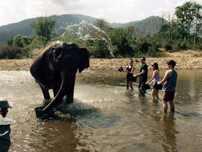 Слон брызгается слониками.