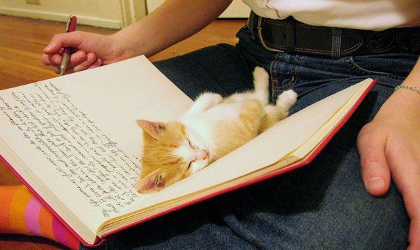 Кошки против книг, кошки которые мешают читать