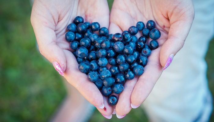 Полезные свойства ягод для организма