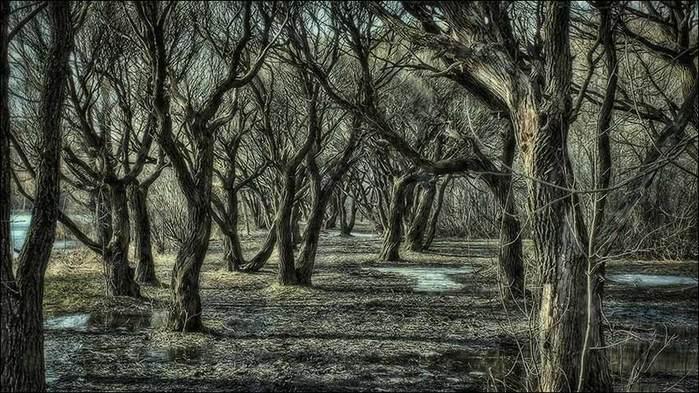 Парк Покровское-Стрешнево/3673959_19 (700x393, 83Kb)