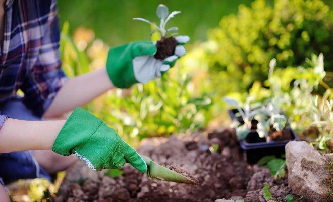 : Садово-огородные мифы