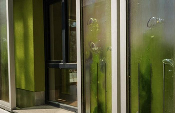 Технологии будущего: здания с подпиткой от водорослей.