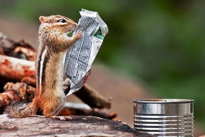 Изумительные фото снятые точно в идеальный момент фото, кадр, животные