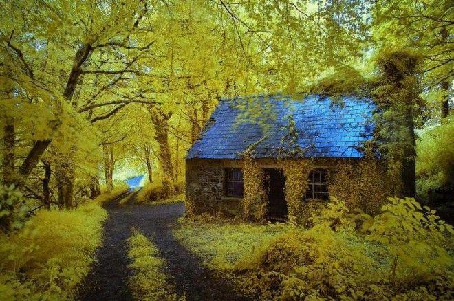 houseinwood06 Самые красивые дома в лесу