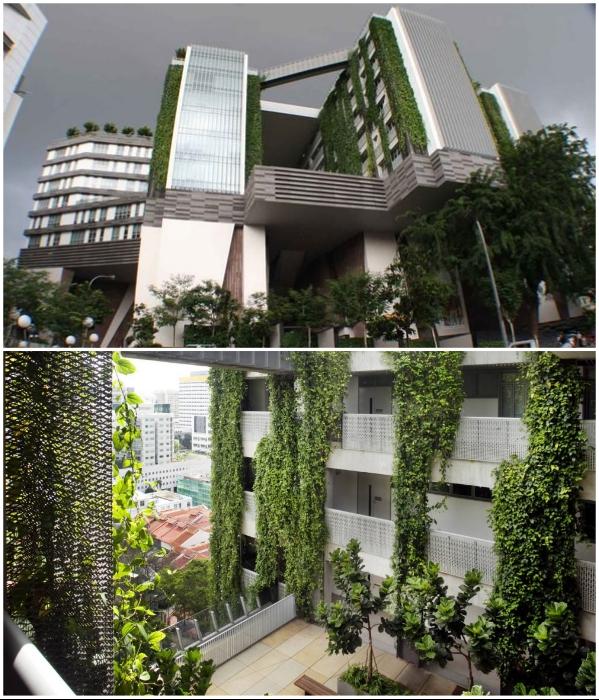 Подобного рода здание станет источником вдохновения для тысяч студентов и не только (Школа искусств WOHA, Сингапур). | Фото: exploresrilanka.lk.