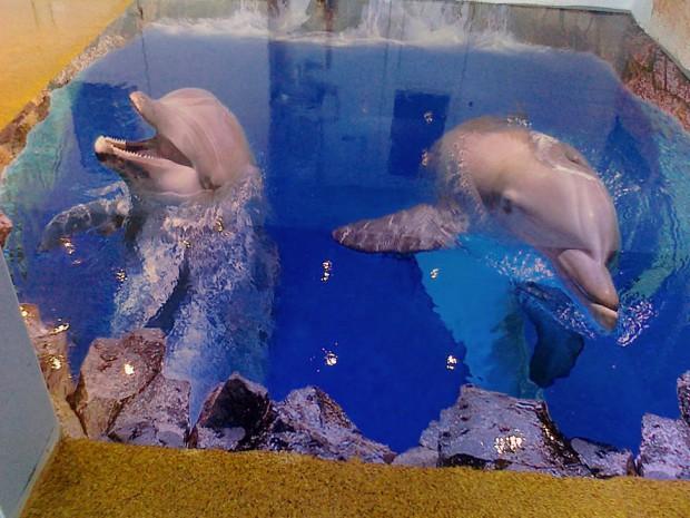 Наливной пол с рисунком дельфина