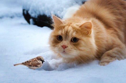 На изображении может находиться: кот