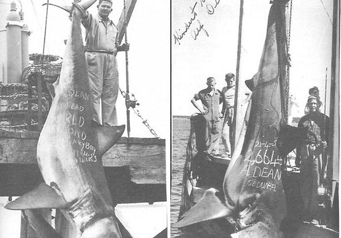 Самые большие когда-либо пойманные акулы