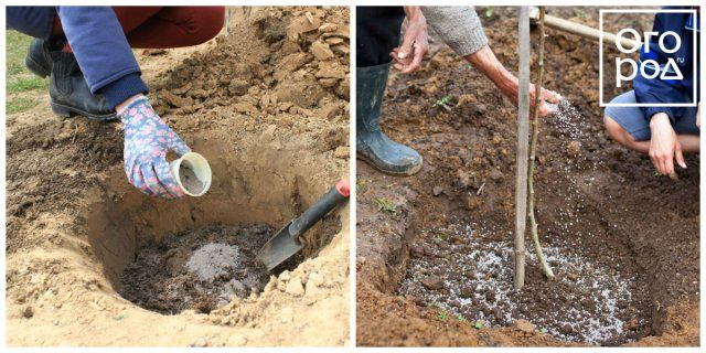 Коллаж - улучшение качества почвы