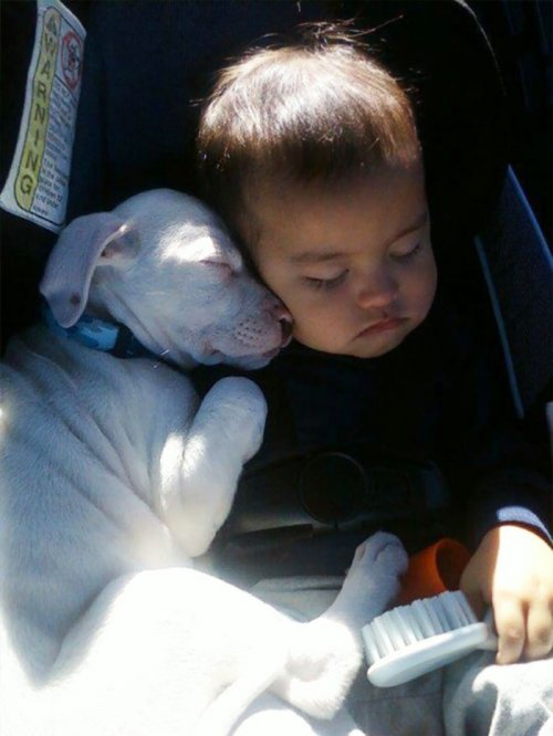 Очаровательные парочки: малыши, спящие в обнимку со своими собаками (26 фото)