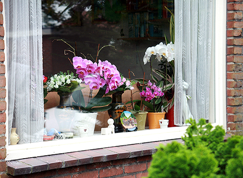 Окна, ориентация растений