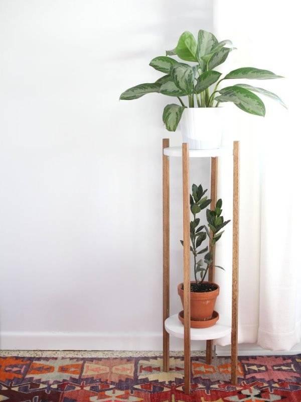 Комнатные растения как декор