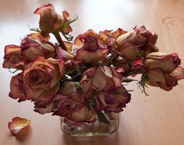 Почему не стоит держать дома сухие цветы, и что делать, если вы не хотите с  ними расстаться   Мой ❤ цветник   Яндекс Дзен