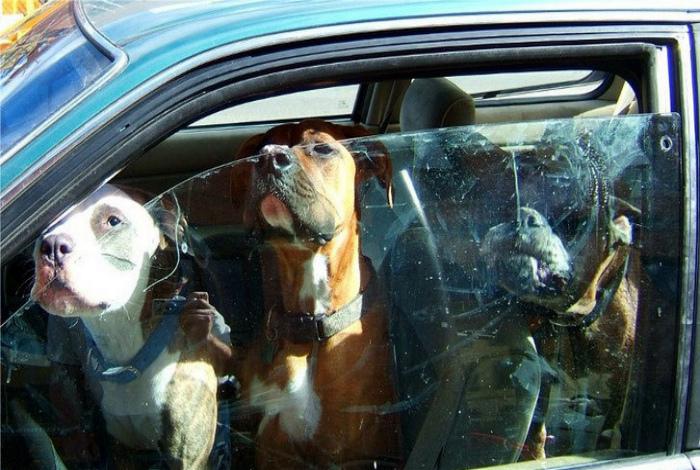 Живая охрана авто.