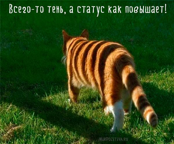 тень на кошку похожа на тигра
