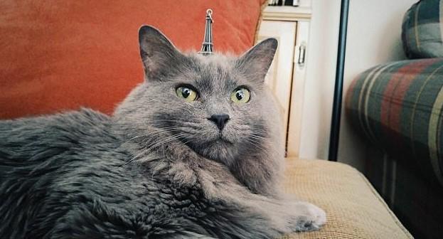 Когда мечтаешь о Париже животная мода, животные, животные и люди, коты, показ мод, смешно, фото, шляпки