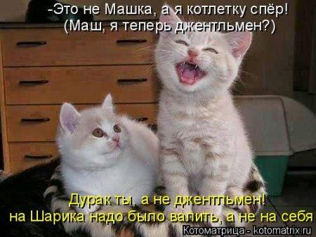Картинки с надписями котами приколы