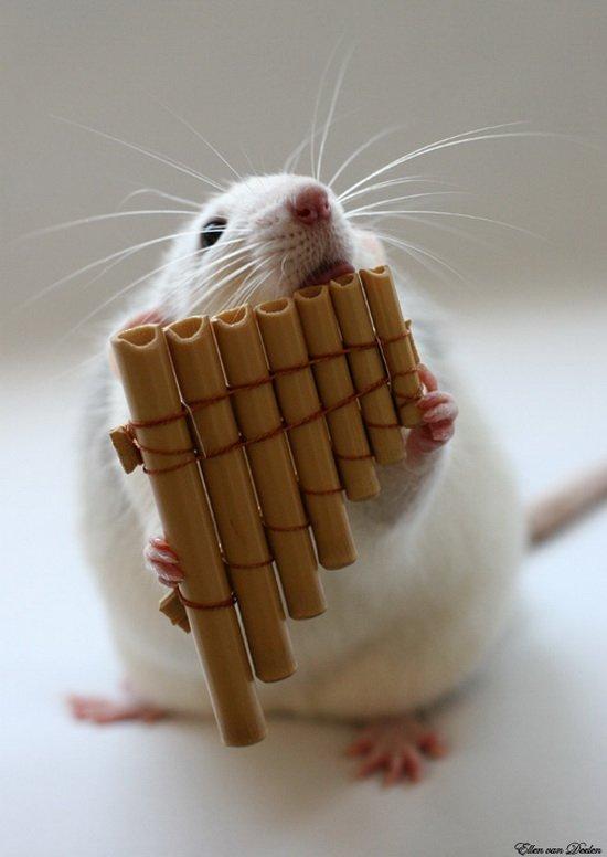 Крыса играет на многоствольной флейте. Эллен ван Дилен. Фото