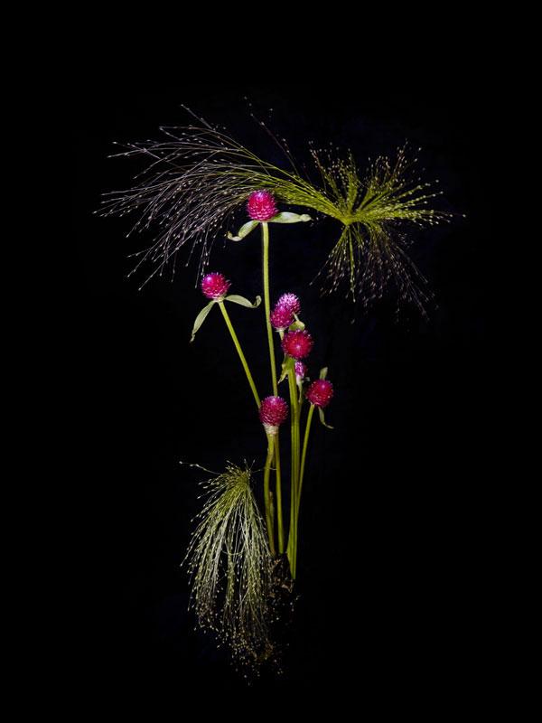 Новогодние салюты в форме цветов — проект Сары Илленбергер