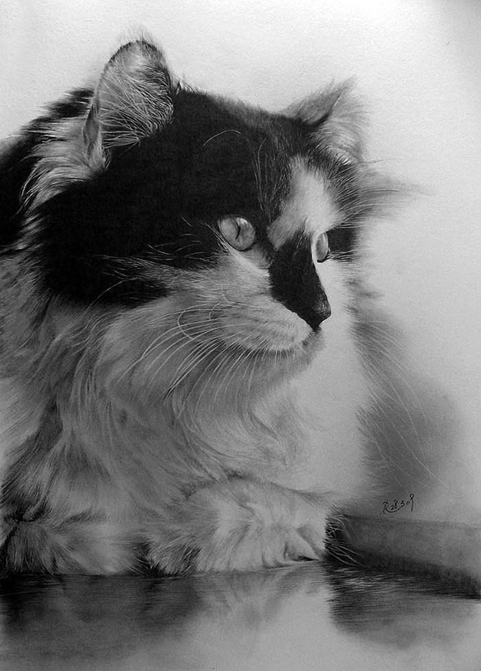 drawncats07 Мастер карандашного наброска   Пол Ланг